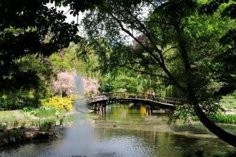 21.Nad stawem w ogrodzie botanicznym we Wrocławiu